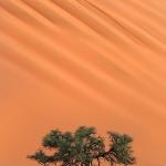 Sculpted by the Desert