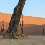 Petrified Roots