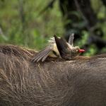Bath on a Warthog