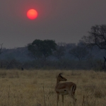 Savanna Sunset