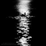 Moonlight Swim