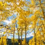 Seasonal Gold