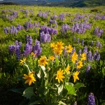 Rocky Mountain Boquet