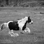 Gypsy Running (black and white)