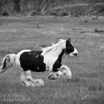 Gypsy Running (black and white)