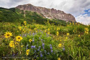 Gothic Mountain Summer