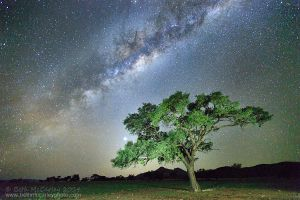 Camelthorn Under Milky Way